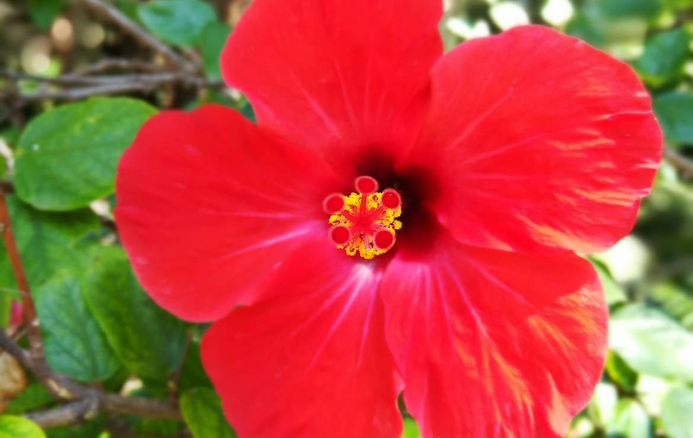7 principes de naturopathie